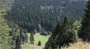Frauenwald im Sommer (18)