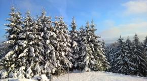 Frauenwald im Winter (17)