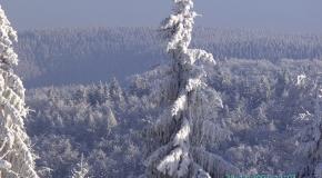 Frauenwald im Winter (2)